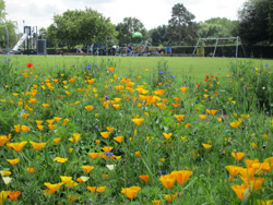 parkflowerssmall